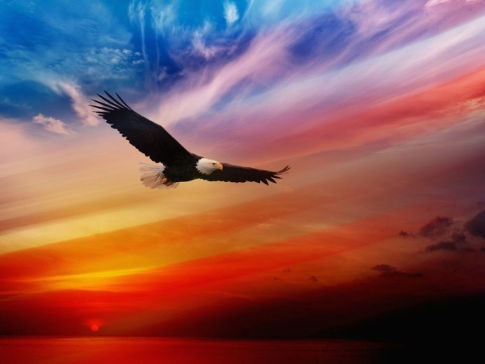 Eagle-Soaring-Wallpaper-800x600